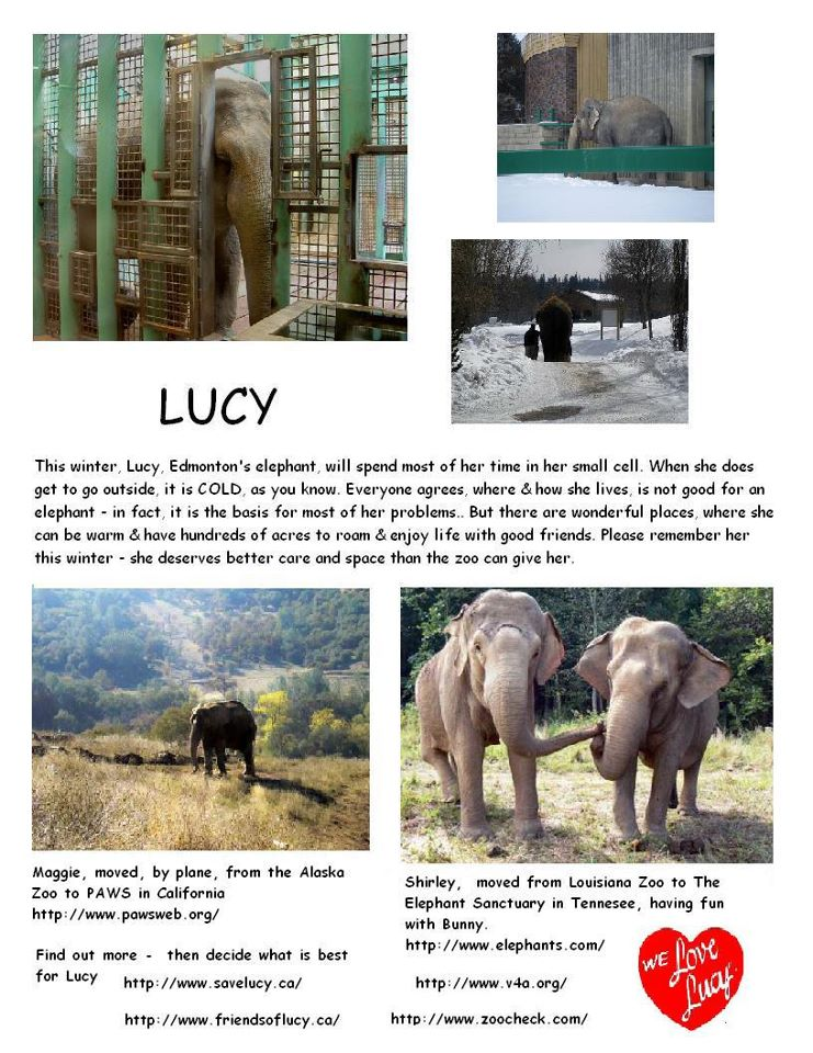 Free Lucy